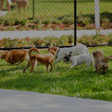 Large Dog Park at Coventry Cove Senior Apartments